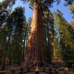 Backpacking zapadne pobrezie Sequoia park